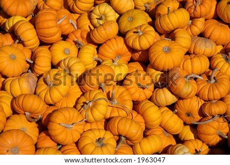 small pumpkins in huge pile - stock photo