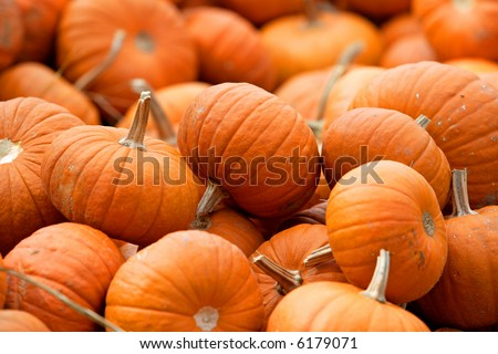 Small pumpkins that can be used as a background - stock photo