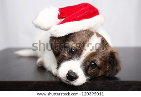 small puppy and New Year's cap