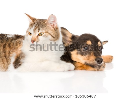 small puppy dog and kitten lying together. isolated on white background