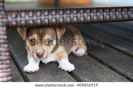 Small Puppy Hiding Under Outdoor Furniture  - stock photo