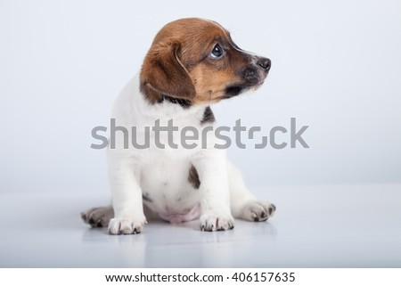 small puppy sit and lookig at side at white background