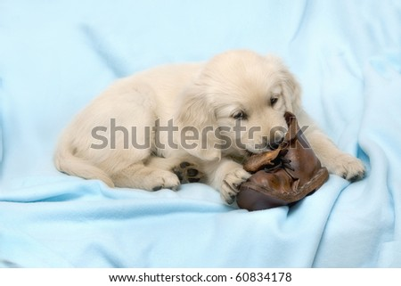 Small puppy with ball - golden retriever - stock photo
