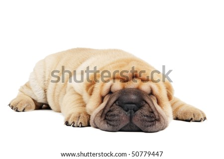small purebred lying beige sharpei puppy isolated on white - stock photo
