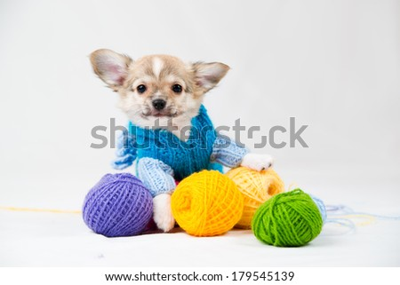 Small purebred puppy on  white background. Pet in the studio. - stock photo