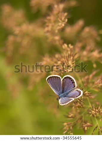 Small purple butterfly on grass - stock photo