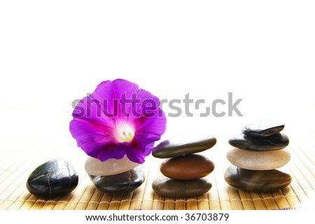 small purple flower balancing on smooth river stones