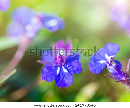 Small purple flowers on grass background.