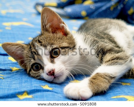 small pussy cat playing in the bed - stock photo