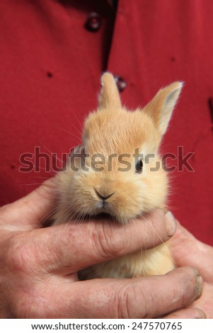 small rabbit in human hand - stock photo