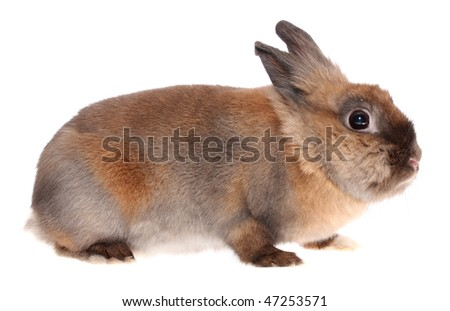 small rabbit on a white background, is isolated.