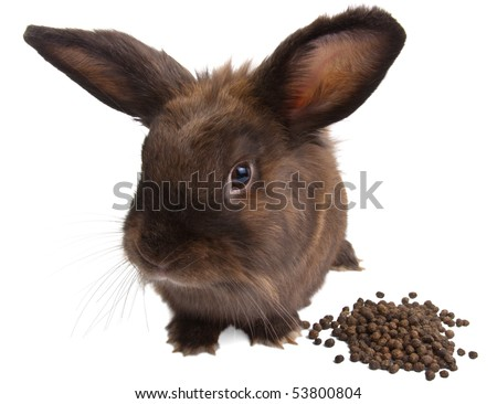 Small rabbit with a heap of the poo
