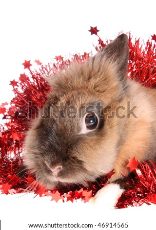 small rabbit with tinsel on a white background, is isolated.