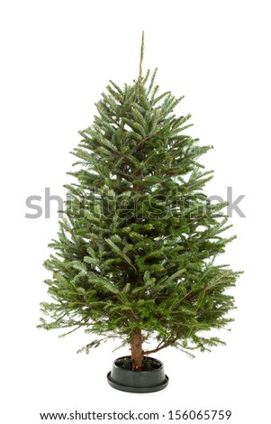 Small, real undecorated bare Christmas tree isolated on a white background - stock photo