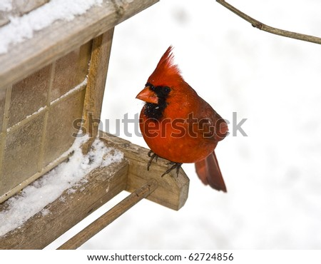 Small red cardinal sitting on bird feeder following a snowstorm - stock photo