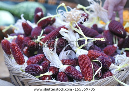 small red corn cobs - stock photo