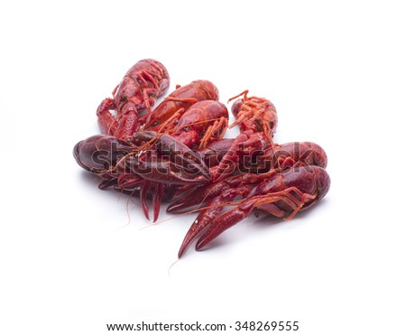 small red crayfish, typical in some rivers of Spain - stock photo
