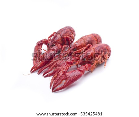 small red crayfish, typical in some rivers of Spain
