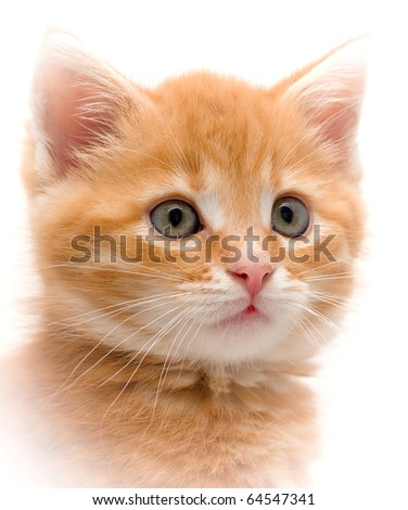 Small red kitten