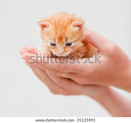 Small red kitten in human hands - stock photo