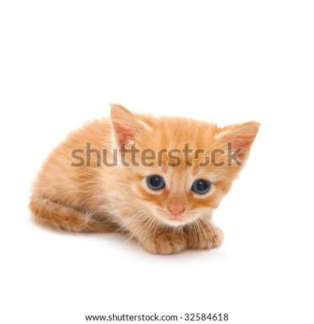 Small red kitten on a white background - stock photo
