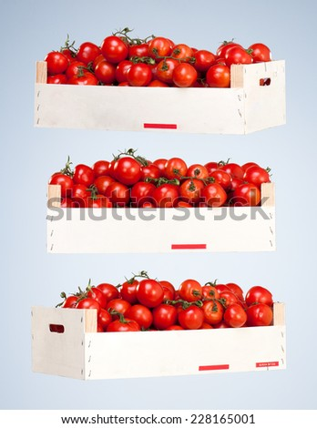 Small Red Tomatoes in a Wooden Box isolated on Blue Studio Background - stock photo
