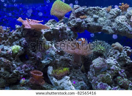 Small Reef aquarium with soft corals, SPS and LPS. - stock photo