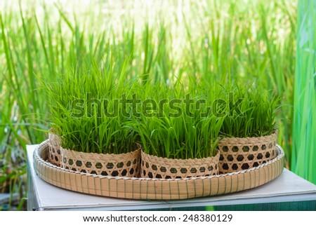 small rice - stock photo