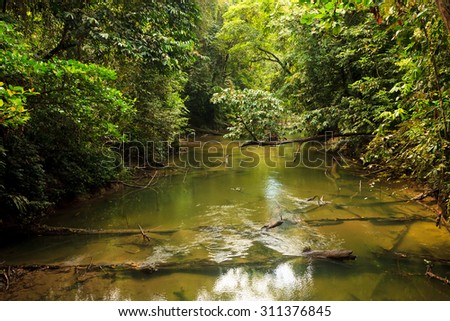 Small river in jungle - stock photo