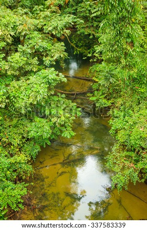 Small river in jungle borneo malaysia - stock photo
