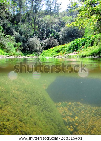 Small river in tropical park - half-underwater view. Shot in Paradise Valley Nature Reserve, Durban, South Africa. - stock photo