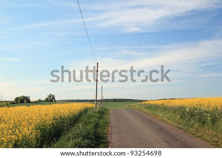 small road in germany at springtime, bad arolsen, hesse