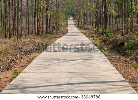 Small road in tropical forest, north of Thailand