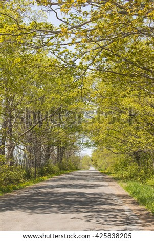 Small road lined with trees covered in fresh spring leaves. - stock photo