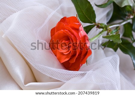 Small rose decoration over creme bride dress with bow in lace. - stock photo