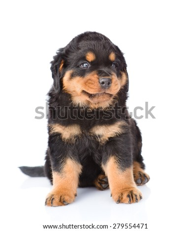 Small rottweiler puppy sitting. Isolated on white background - stock photo