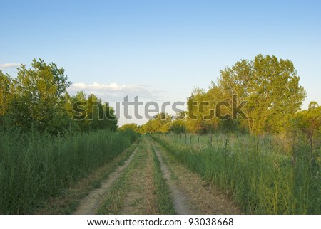Small rural dirt road leads straight forward in late afternoon on the Colorado prairie - stock photo