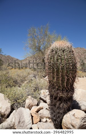Arizona Barrel Stock Photos Royalty Free Images Amp Vectors