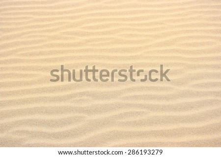 small sand dunes texture  in a sunny day
