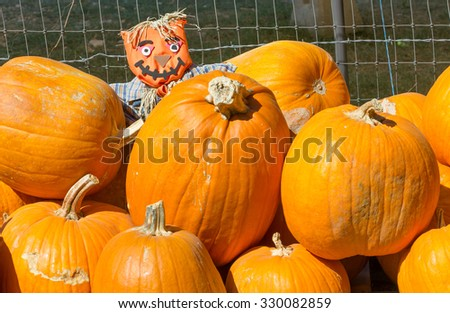 small scarecrow hiding in pumpkin patch - stock photo