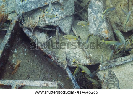 small school of blue stripped grunt in a shipwreck - stock photo