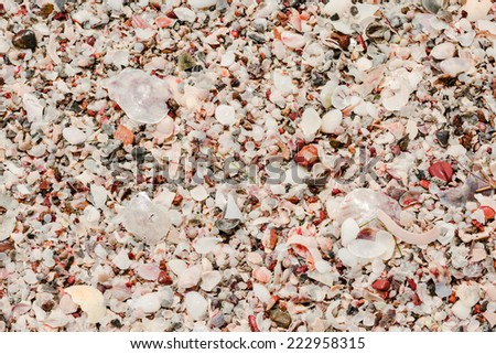 Small seashells and pebbles beach in texture