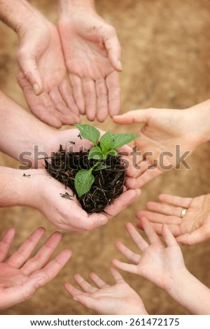 Small seedling growing in group hands - symbol for teamwork - stock photo