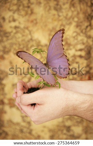 Small seedling growing  in hands with butterfly - stock photo