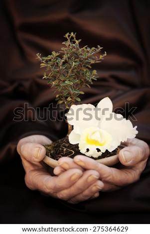 Small seedling growing  in hands with orchid - stock photo