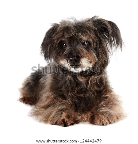 Small shaggy mongrel on a white background - stock photo