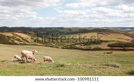 Small sheep flock in a bucolic pristine landscape near M�©rtola, Alentejo, Portugal - stock photo