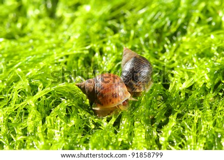 Small shells on the sea moss - stock photo