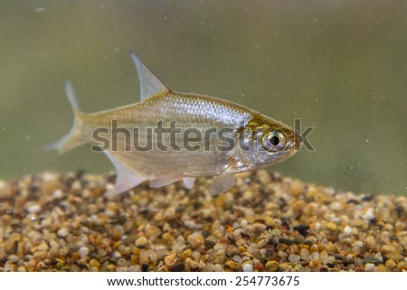 Underwater Fishes Landscape Small Stock Photos Underwater