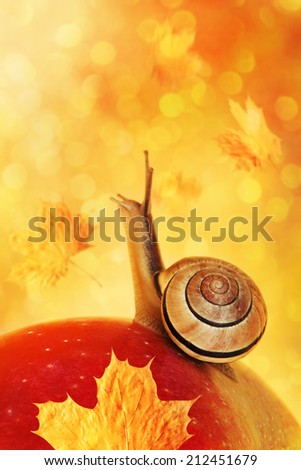 Small snail on red apple on autumn background. - stock photo
